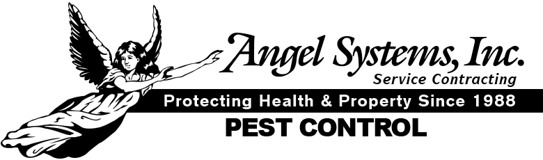 Angel Systems Inc.